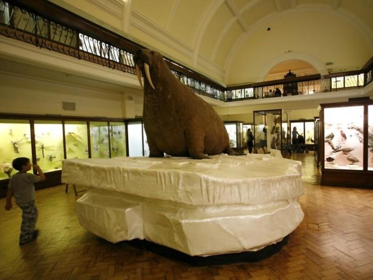 Massive lolrus