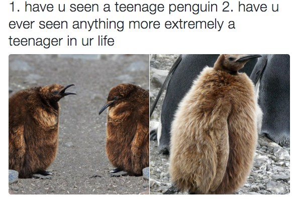 Teenage penguins